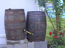 Two Oak Rain Barrels Connected on a Concrete Stand